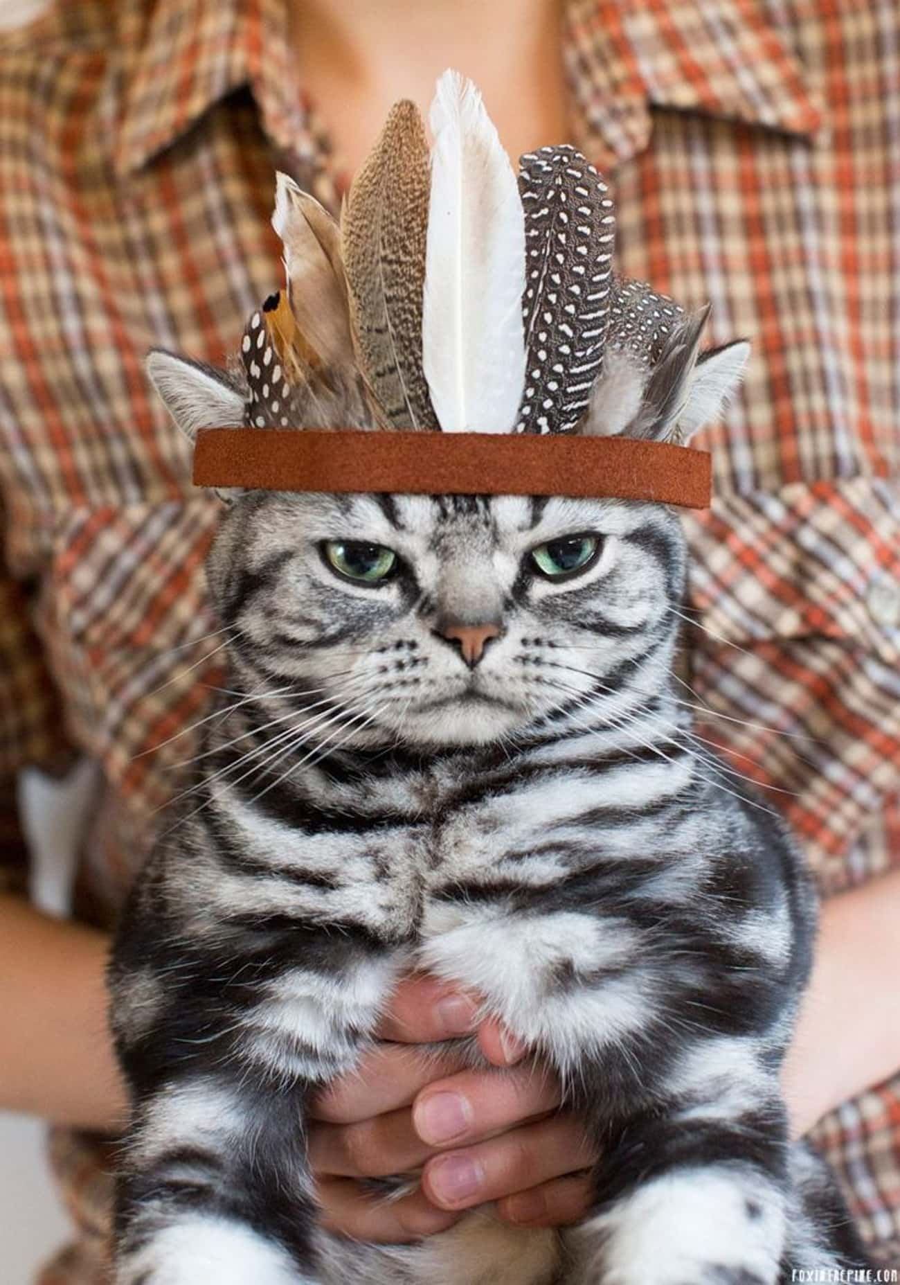 Chief Kitty Remains Skeptical  is listed (or ranked) 4 on the list Animals Who Are Thankful for Nothing
