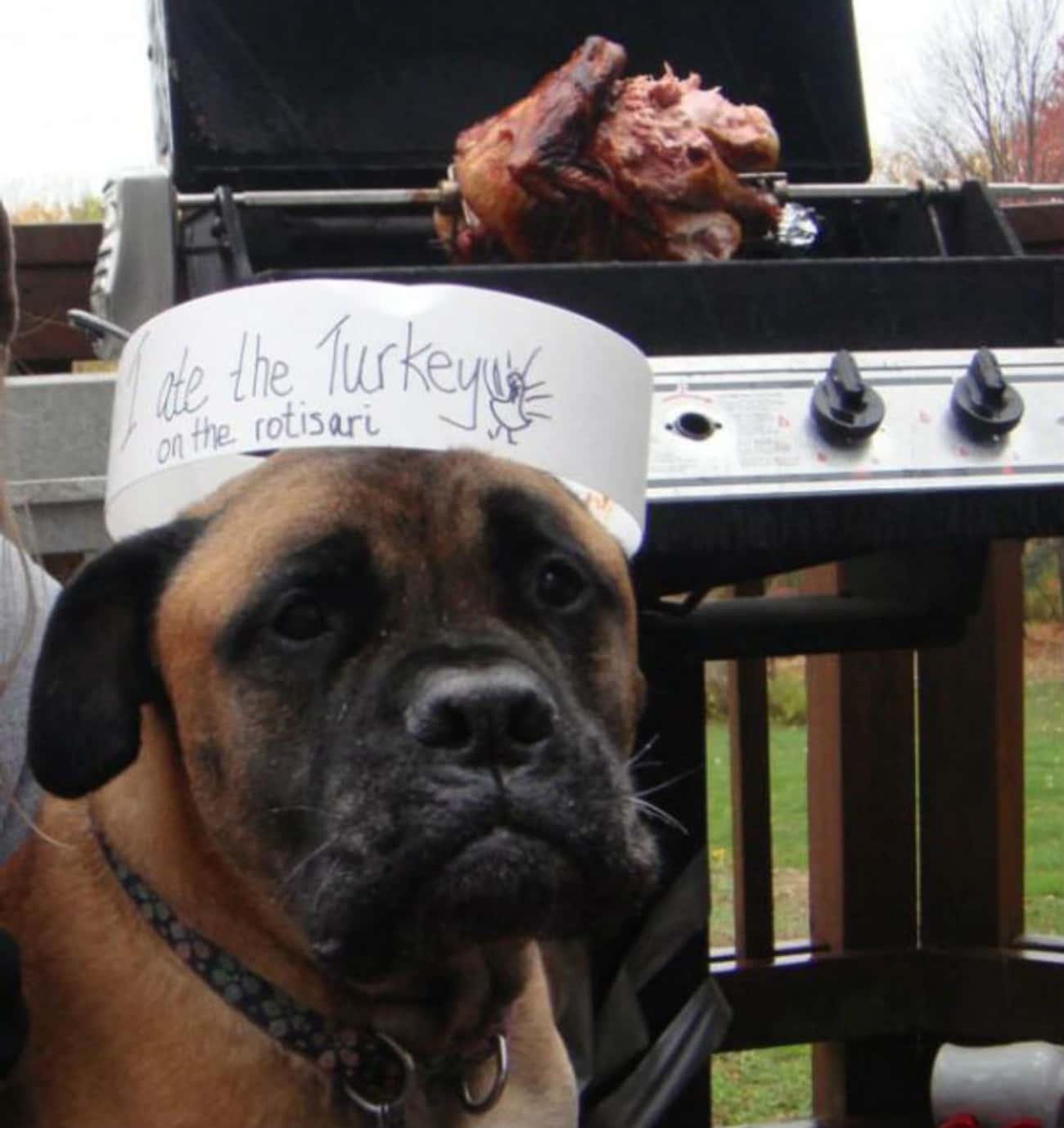 This Rotisserie-Robbing Wild M is listed (or ranked) 3 on the list 11 Dogs Who Ruined Thanksgiving