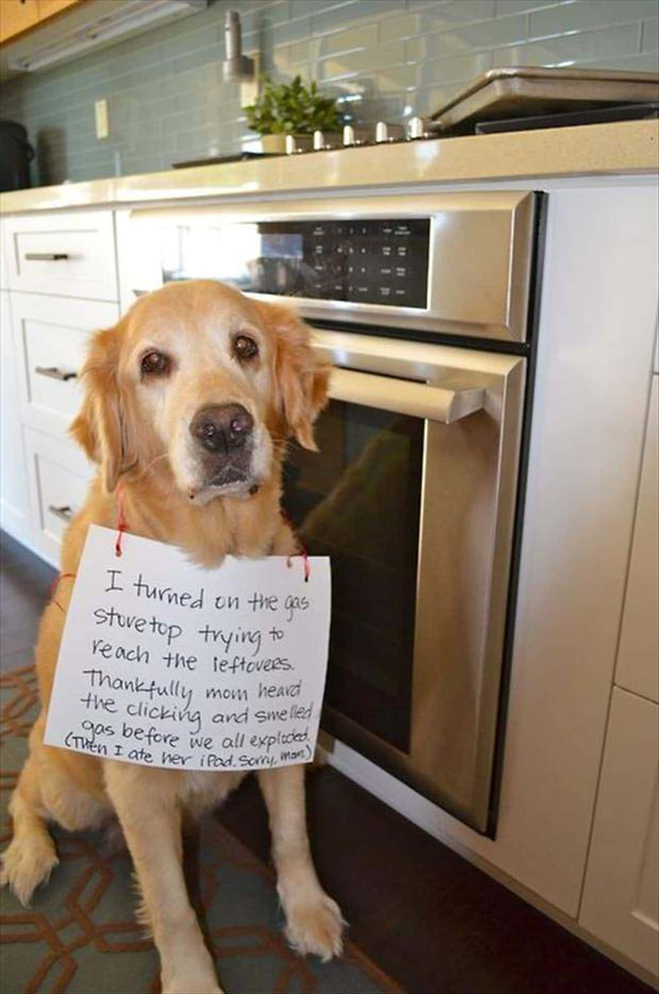 This Hungry Guy Who Almost Ble is listed (or ranked) 4 on the list 11 Dogs Who Ruined Thanksgiving