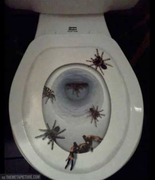 For the Person Who Hates Their... is listed (or ranked) 4 on the list 20 Hilarious Toilet Seat Covers To Trick Your Houseguests
