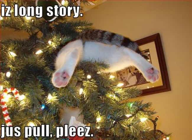 There's No Shame in Aski... is listed (or ranked) 4 on the list 29 Cats Who've Had It With the Christmas Tree