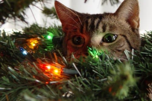 Soon. on Random Cats Who've Had It With the Christmas Tree