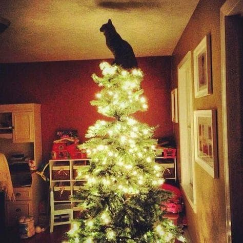 Image of Random Cats Who've Had It With the Christmas Tree