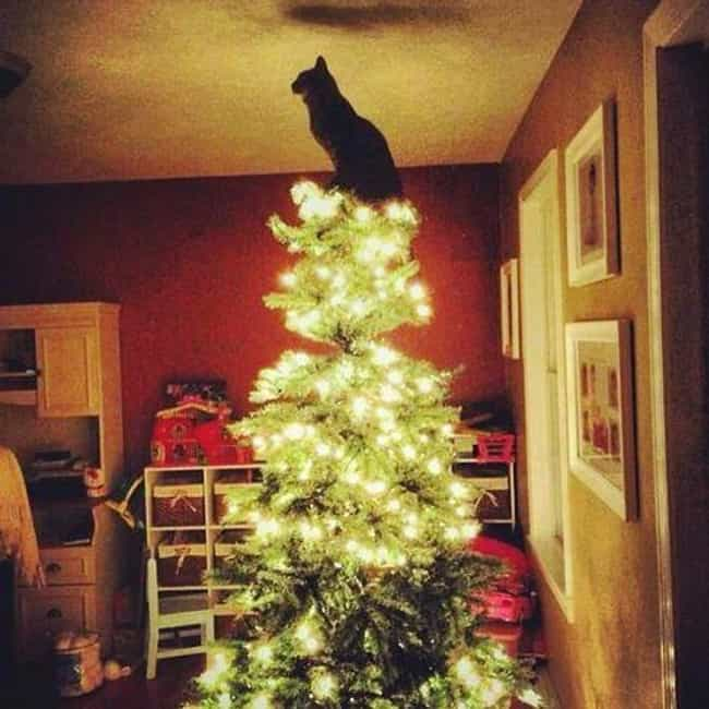 """You Said There Was... is listed (or ranked) 1 on the list 29 Cats Who've Had It With the Christmas Tree"