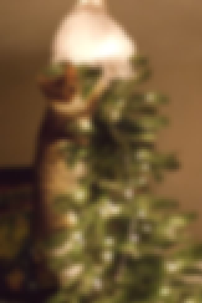 Claim You Were Merely Straight... is listed (or ranked) 2 on the list 29 Cats Who've Had It With the Christmas Tree