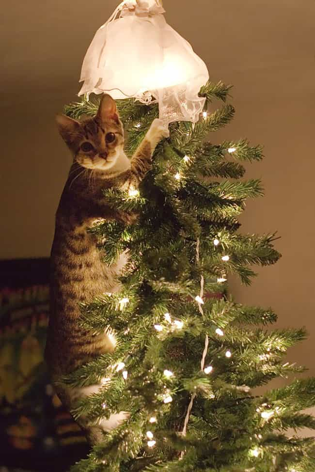 Claim You Were Merely St... is listed (or ranked) 3 on the list 29 Cats Who've Had It With the Christmas Tree