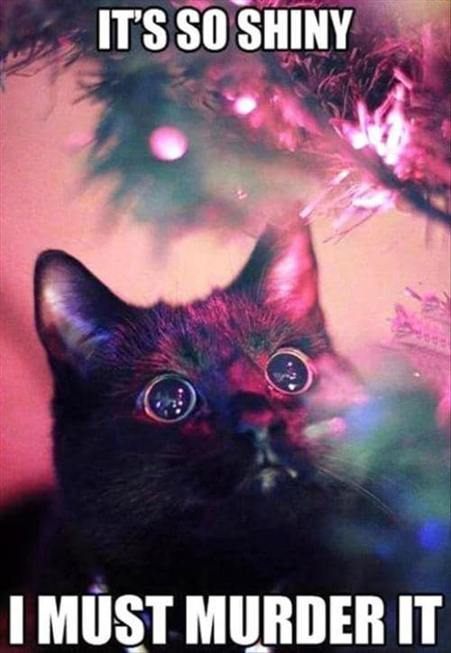 """Always Adopt the """"If It Shines It's Mine"""" Attitude on Random Cats Who've Had It With the Christmas Tree"""