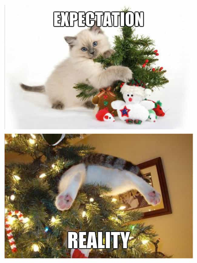Kitty's First Christmas ... is listed (or ranked) 3 on the list Expectation Vs. Reality: Christmas Edition