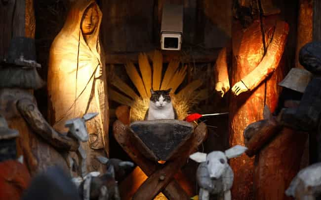 """""""Think of Me as an ... is listed (or ranked) 2 on the list 37 Cats Crashing Nativity Scenes"""