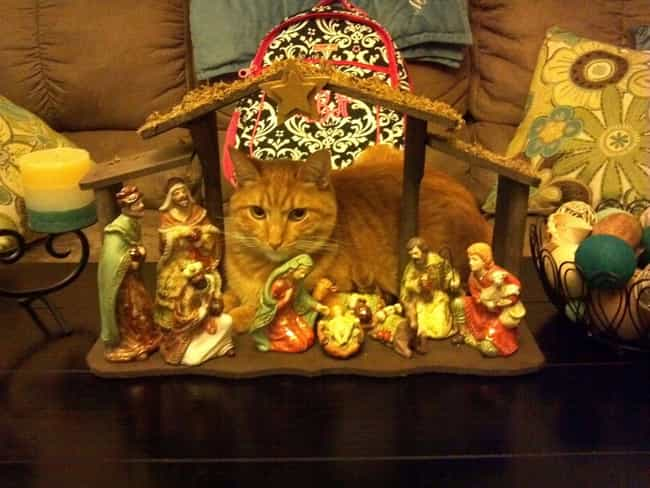 """""""I Noticed the Scen... is listed (or ranked) 4 on the list 37 Cats Crashing Nativity Scenes"""