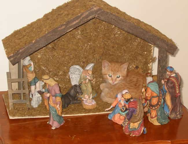 """""""Well I Didn't See ... is listed (or ranked) 4 on the list 37 Cats Crashing Nativity Scenes"""