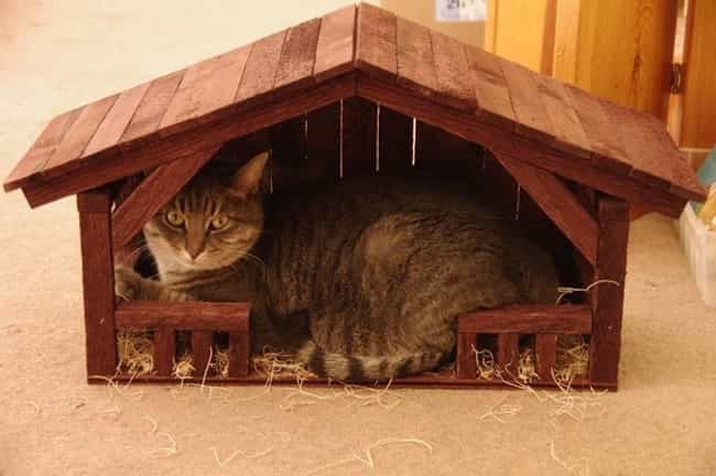 """""""Sorry, You Just Mi... is listed (or ranked) 1 on the list 37 Cats Crashing Nativity Scenes"""