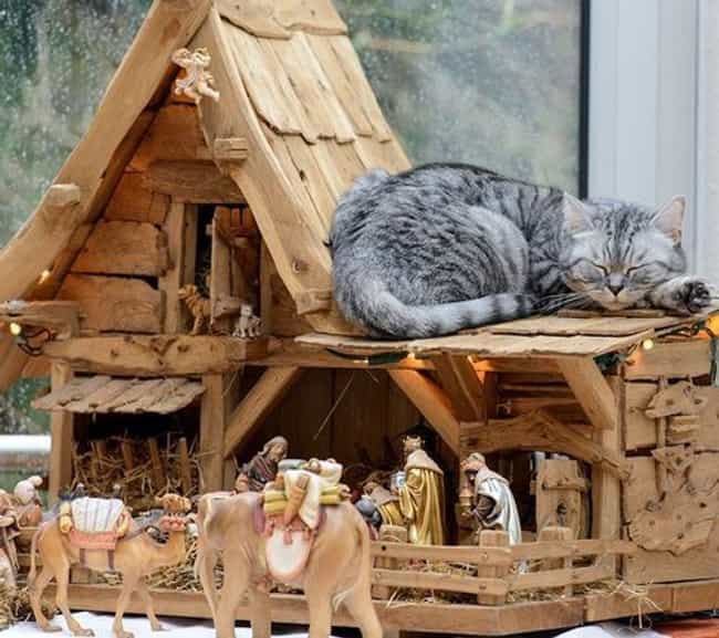 """""""It's Cool. I'll Ta... is listed (or ranked) 1 on the list 37 Cats Crashing Nativity Scenes"""