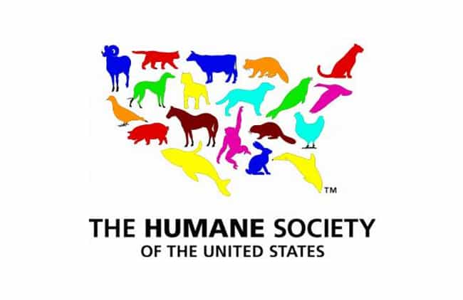 Donate to a Local Animal... is listed (or ranked) 2 on the list Gifts for People Who Love Their Dogs
