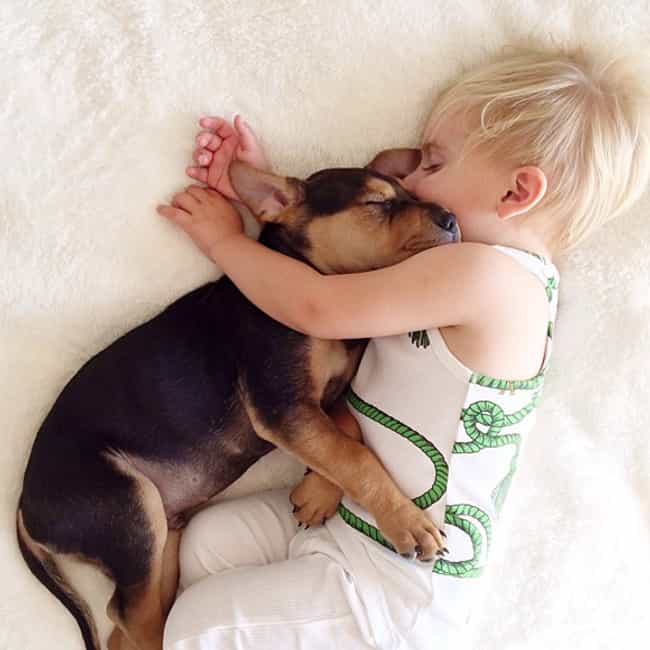 Naptime with Theo and Be... is listed (or ranked) 1 on the list Gifts for People Who Love Their Dogs