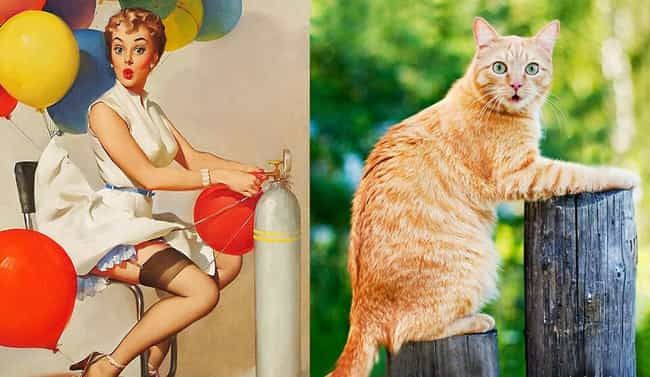 """Oh, Do I Look Gorgeous To... is listed (or ranked) 2 on the list 35 Cats Who Could Have Careers as Pin-Up Girls"