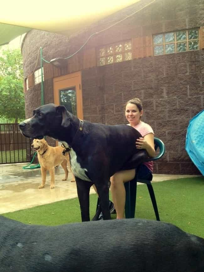 Every Dog Is a Lap Dog at Hear... is listed (or ranked) 5 on the list Only Dog Owners Will Understand These Joys of Dog Ownership
