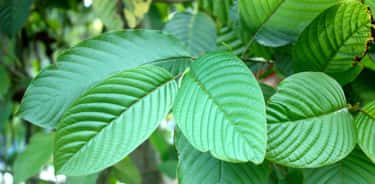 Kratom is listed (or ranked) 1 on the list 16 Recreational Drugs That You Don't Know About Yet