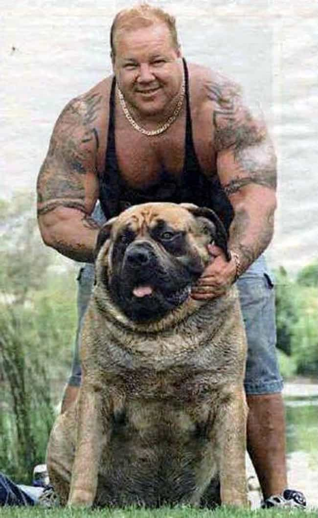 This Big Guy And His Bul... is listed (or ranked) 3 on the list These Pets Are Basically Clones of Their Owners