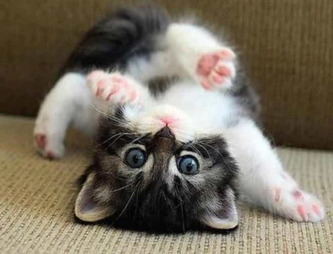 The Most Flexible Cats of All Time