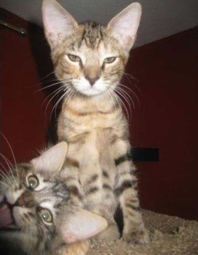 """Surprise Selfie!"" is listed (or ranked) 4 on the list 30+ Funny Cat Selfies You'll Wish Your Cat Took"