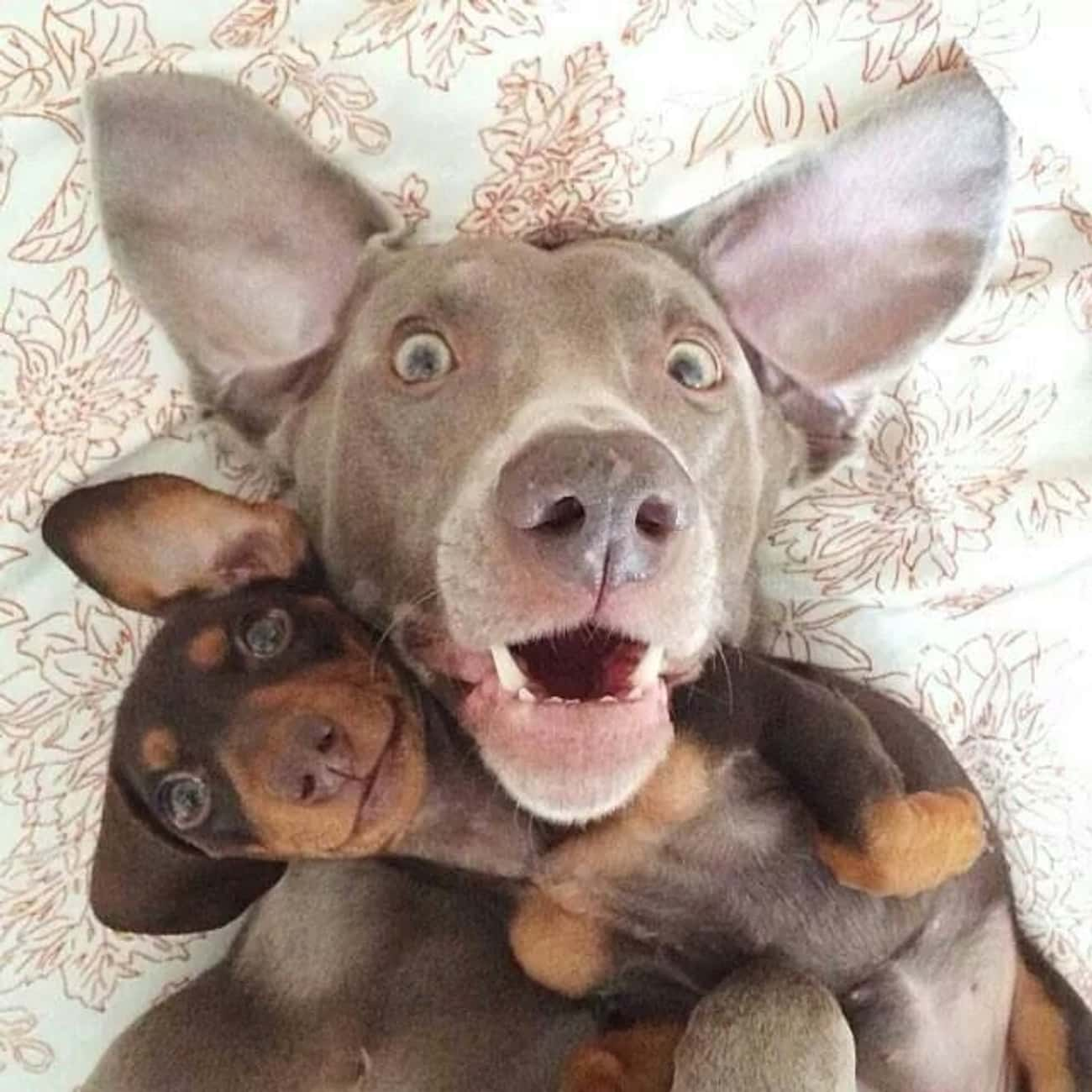 """""""Chillin' with My Bro. is listed (or ranked) 2 on the list 30+ Dog Selfies You've Got to See"""