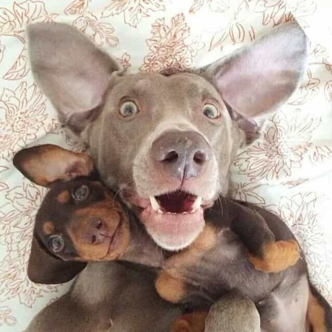 """Chillin' with My B... is listed (or ranked) 1 on the list 30+ Dog Selfies You've Got to See"