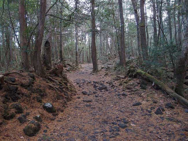 Aokigahara Forest is listed (or ranked) 1 on the list 26 Famous Locations That Are Suicide Magnets