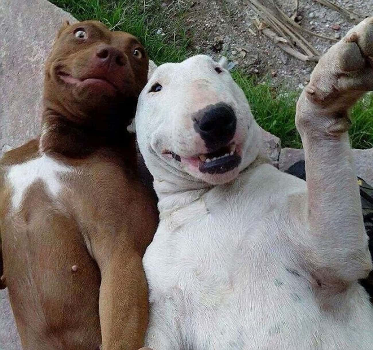 """""""Chillin' with My Dawg is listed (or ranked) 1 on the list 30+ Dog Selfies You've Got to See"""