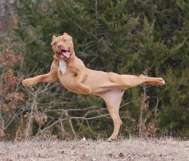 Dogs Are Graceful and Majestic... is listed (or ranked) 3 on the list 28 Cute Derpy Dogs That'll Make You Smile