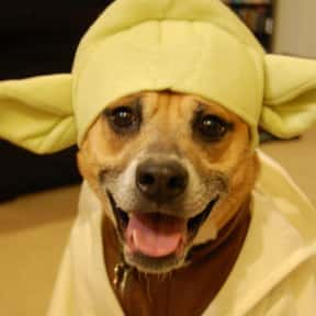 Starwars is listed (or ranked) 20 on the list The Best Pet Clothing Brands