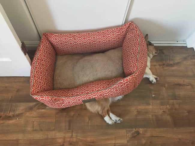 Get a Bed They Said, You'l... is listed (or ranked) 3 on the list 34 Dogs Who Just Don't Get It