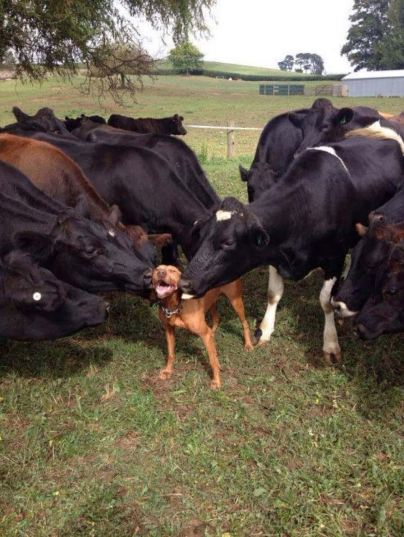 Herding: You're Doing It W is listed (or ranked) 2 on the list 34 Dogs Who Just Don't Get It