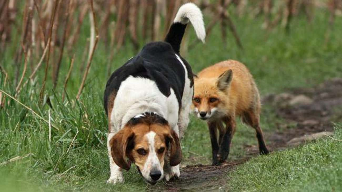 World's Worst Hunting Dog is listed (or ranked) 1 on the list 34 Dogs Who Just Don't Get It