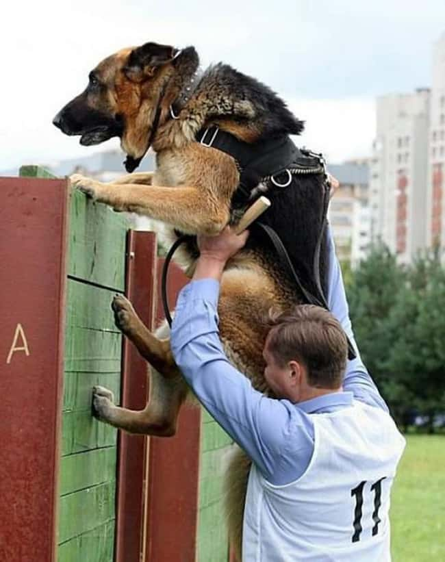 """OMG, Dad, No! Agility Is  is listed (or ranked) 25 on the list 34 Dogs Who Just Don't Get It"