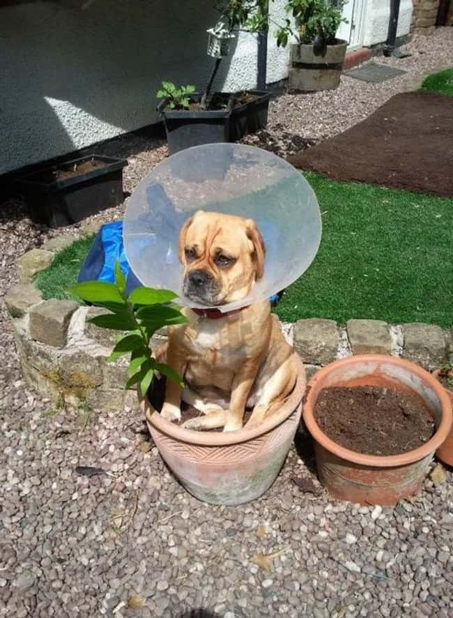 """The Flowers. They Get Me. is listed (or ranked) 6 on the list 34 Dogs Who Just Don't Get It"