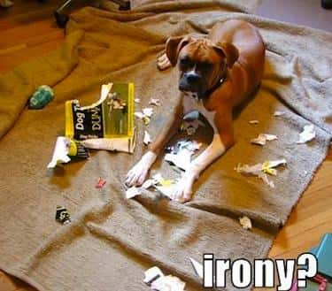 World's Worst Dog Training is listed (or ranked) 6 on the list 34 Dogs Who Just Don't Get It