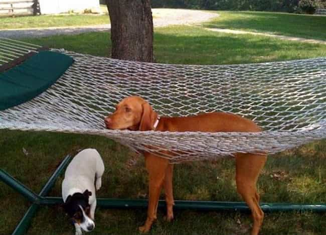 """""""This Is Not Nearly... is listed (or ranked) 4 on the list 34 Dogs Who Just Don't Get It"""