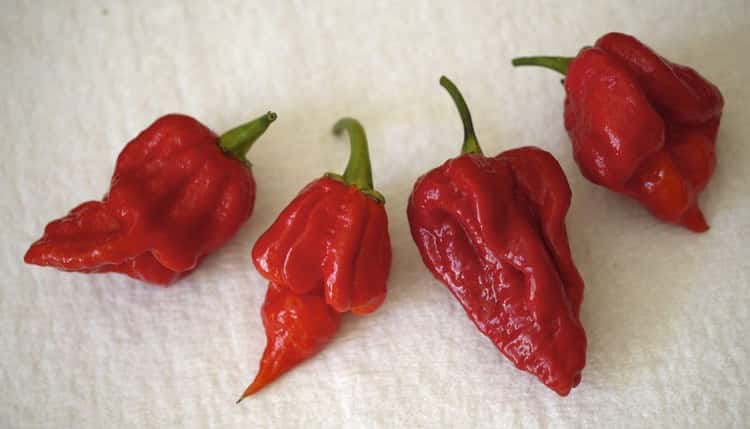 Revenge Is a Dish Best Served with Ghost Peppers