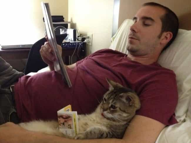 Bro's Night In is listed (or ranked) 2 on the list 27 Cats That Are Rocking the Dad Bod