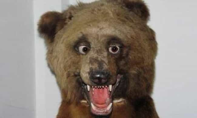 This Disturbing Demonstration ... is listed (or ranked) 2 on the list 33 Taxidermy FAILs That Are Both Funny and Horrifying