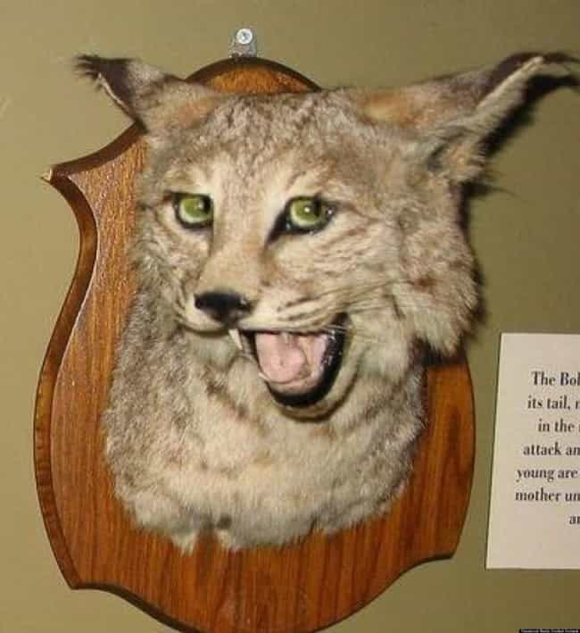 This Guy Totally Knows Somethi... is listed (or ranked) 4 on the list 33 Taxidermy FAILs That Are Both Funny and Horrifying