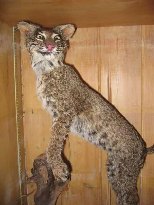 This Beast That Totally Just A... is listed (or ranked) 3 on the list 33 Taxidermy FAILs That Are Both Funny and Horrifying