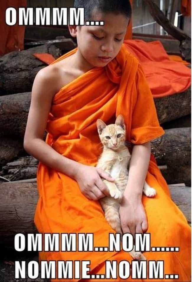 Guru Cat Assures You That the ... is listed (or ranked) 3 on the list 32 Zen Cats Who Could Be Spiritual Gurus