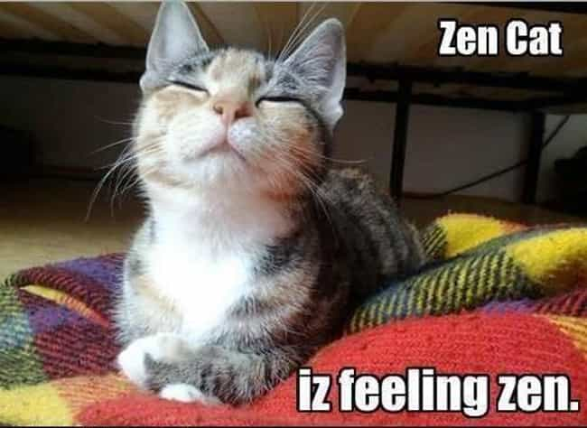 All Zen, All the Time is listed (or ranked) 2 on the list 32 Zen Cats Who Could Be Spiritual Gurus
