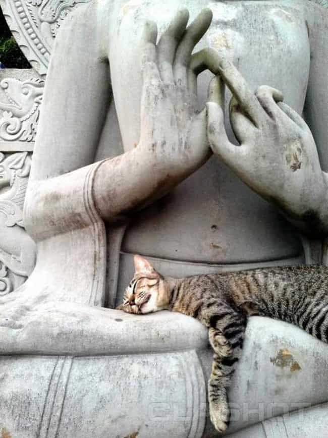 Why Cats Claim Buddha's ... is listed (or ranked) 4 on the list 32 Zen Cats Who Could Be Spiritual Gurus
