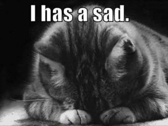 That Awkward Moment When You F... is listed (or ranked) 3 on the list 31 Cats Who Are So Very Sad