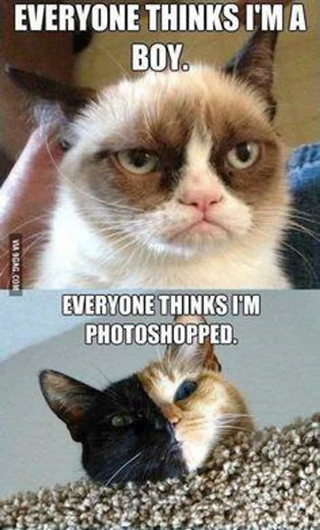 Internet Sensation Problems is listed (or ranked) 4 on the list 31 Cats Who Are So Very Sad