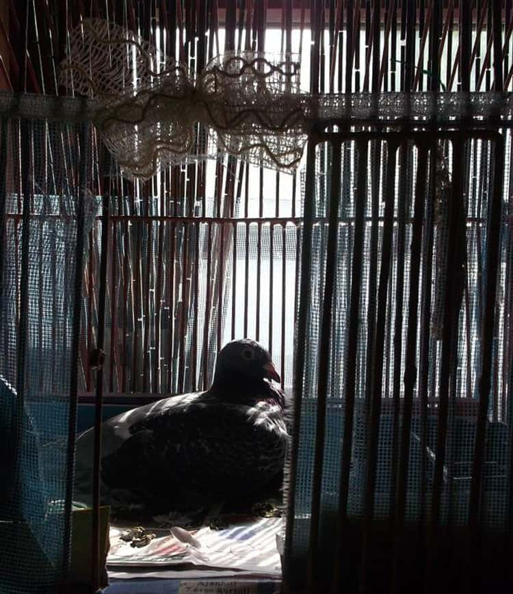 Man Locked in a Pigeon Cage for 20 Years by His Siblings