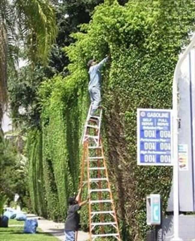 why wouldn t you just get a taller ladder freestyle list photo u1?w=650&q=50&fm=pjpg&fit=crop&crop=faces - 30+ funny unsafe construction photos